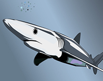 Blue Shark - Vector graphic illustration
