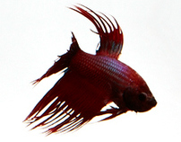 Betta Test Site