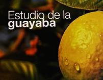 Estudio de la Guayaba / Proyecto Editorial