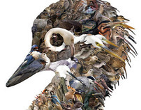 Paradise of thousand birds