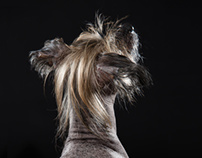 CHINESE CRESTED DOG NEO