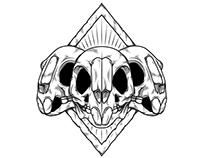 hamster skull