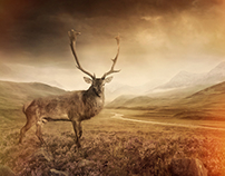 Stag - Retouching Project