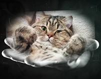 История кошек или видеомонтаж!!
