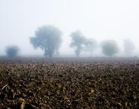 Fog's land