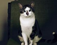 cat&dog portrait