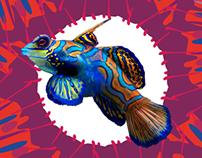 Morfología del Pez Mandarín- Mandarin Fish morphology