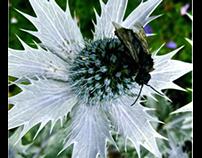 Gardens, Photography