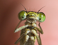 Insects & Other Critters