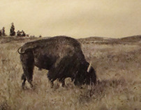 Charcoal Buffalo Drawing