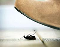 Logo & Website / Fort Myers Pest Control