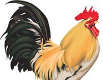 Rooster Digital Painting Illustration