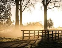 A Golden Morning