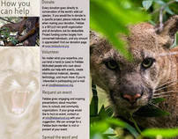 The Felidae Conservation Fund
