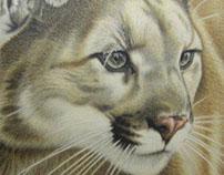 swuwa, cougar