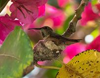 colibri's nest