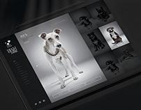Saatchi & Saatchi Digital Portfolio