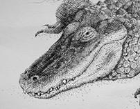 KROKODIL (crocodile)