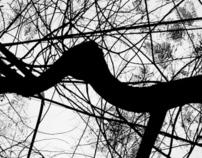 Entanglements