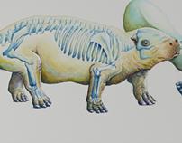 Sirenian Evolution