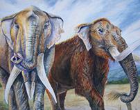 The Miocene Megaherbivores