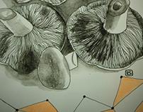 shrooms & cacti