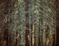 Jo Brown | Trees, Forest