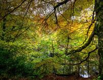 Scotland :: Killiecrankie Autumn