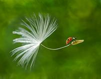 Ladybirds Life