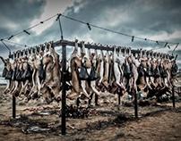 Hunting/Killing/Culling