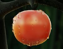 Tomato Tomatini