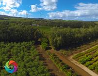Kahuku Farms, North Shore Oahu