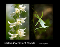 Native Orchids of Florida (Book)