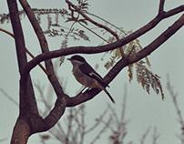 Birds (Series)