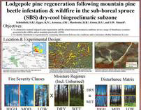 Lodgepole Pine Regeneration Following MPB and Wildfire