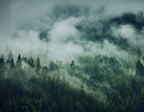 Cloudy forest