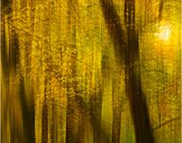 podzimni variace/ autumn variations