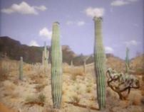 Cactus 2013