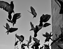 Kuş.lar