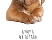 Adopta Querétaro