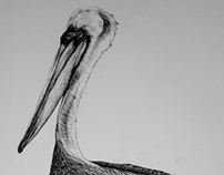 Black Pen Pelican