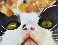 Gato acuarela