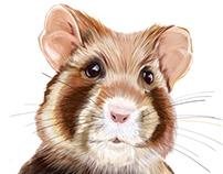 Illustration:European Hamster 🐹 Cricetus cricetus