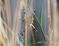 Arachnoids //