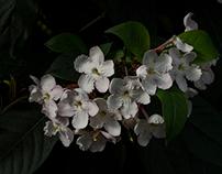 Flowers in the CBD