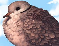 :: Flustered Dove ::