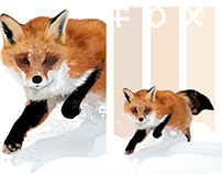 Fox Drawings - Winter Fox - by K. Fairbanks