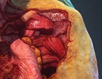 Human Cadaver 3D model