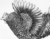 Coursework: Flight of the Flock