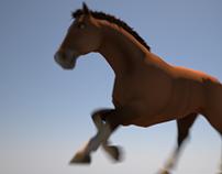 Horse animation study